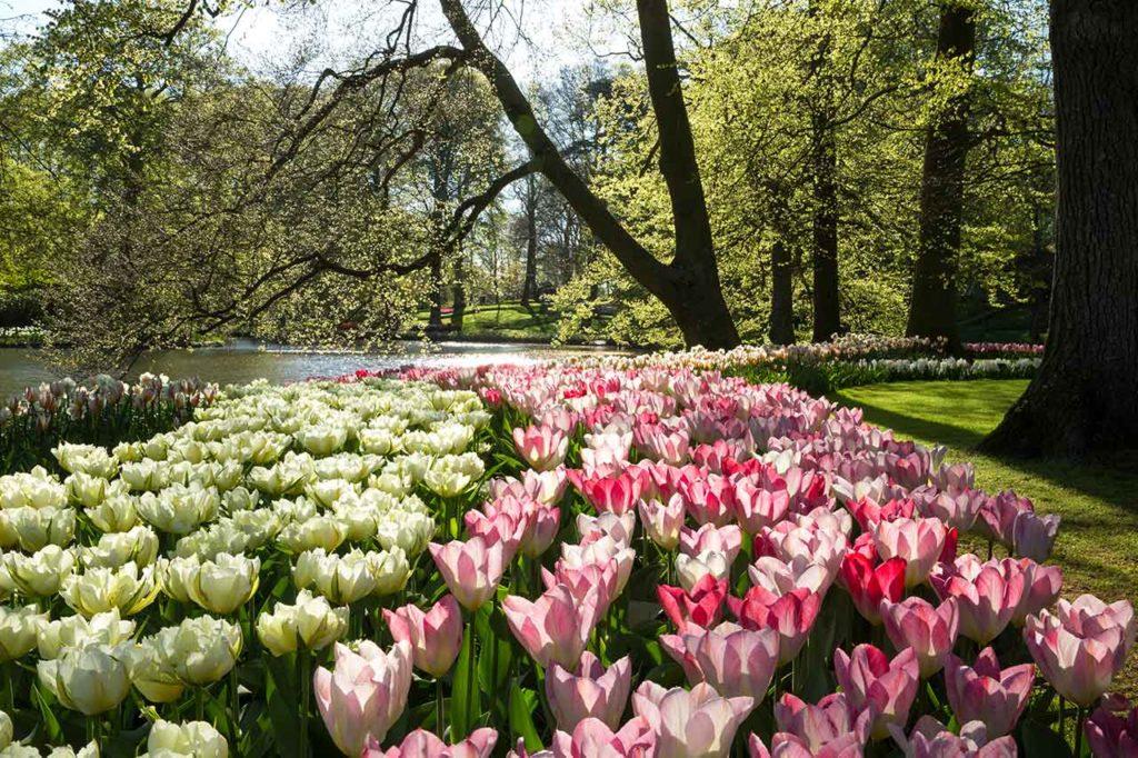 Visiter le Keukenhof près d'Amsterdam : conseils et bons plans