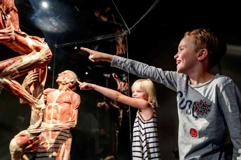 Body Worlds à Amsterdam : Horaires, prix et tickets coupe-file